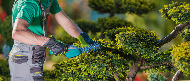 Professional Landscaping Services in CA